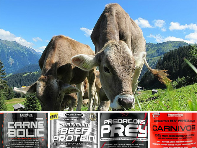 The best beef protein