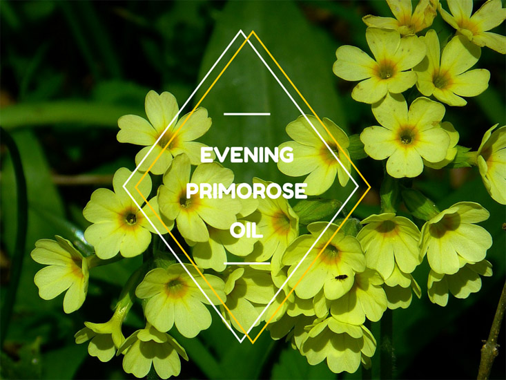 Evening Primrose Oil, benefits and side effects